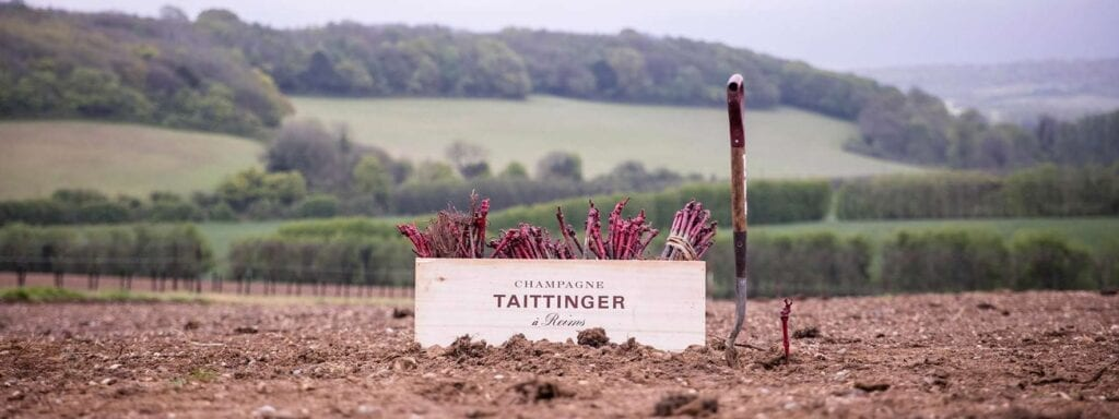 Domaine Evremond Taittinger Champagne vineyard in England
