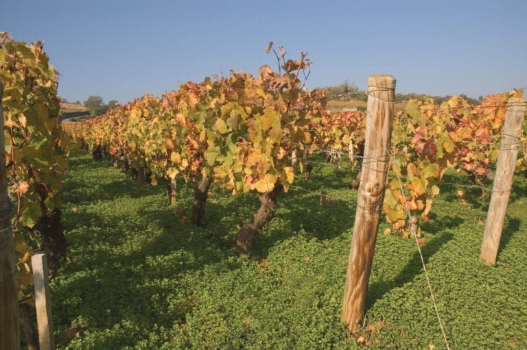 Vineyards of Les Rugiens, a Premier Cru vineyard within the Pommard appellation in the Côte de Beaune subregion of Burgundy in the Cote d'Or