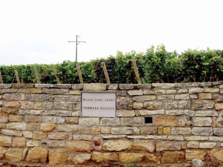 Vineyard Pommard, Burgundy, Louis Jadot, stone wall