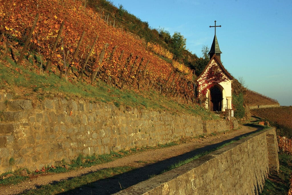 Steep Rangen de Thann vineyards in Alsace, Domaine Zind-Humbrecht winery