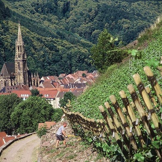Vineyard in Alsace, France - Rangen de Thann Grand Cru