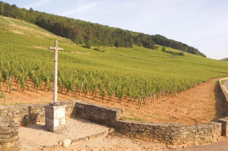 Clos de la Croix de Pierre, Louis Jadot, vineyards