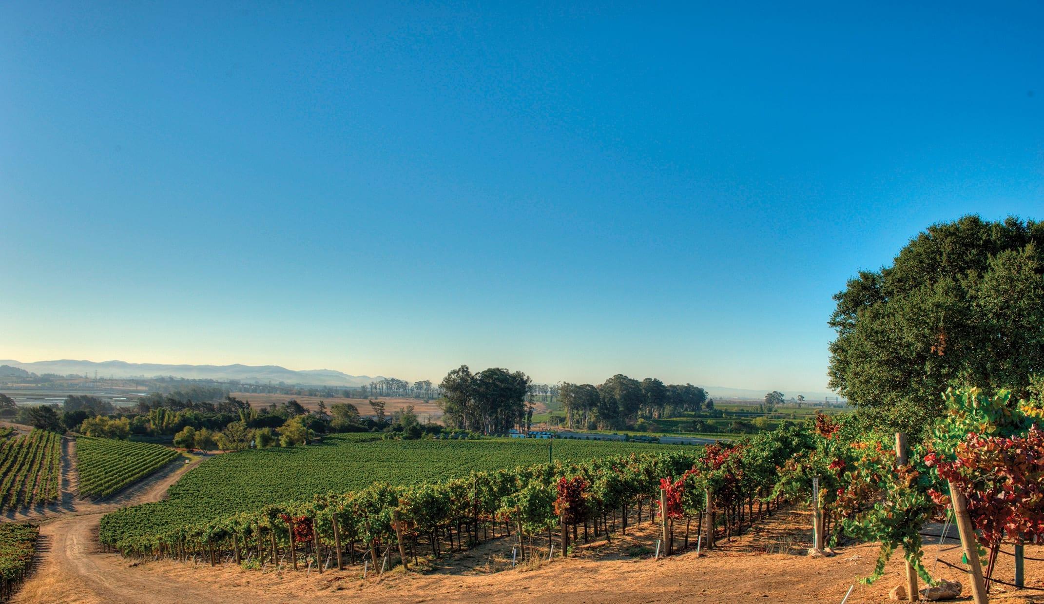 Napa valley, Cakebread vineyards