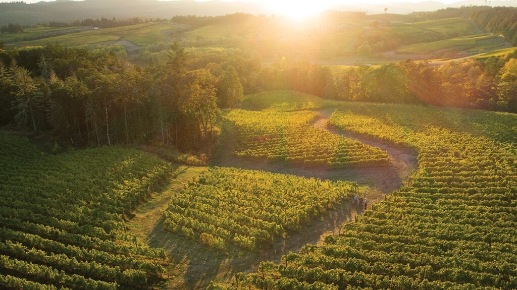 Resonance vineyard, Oregon