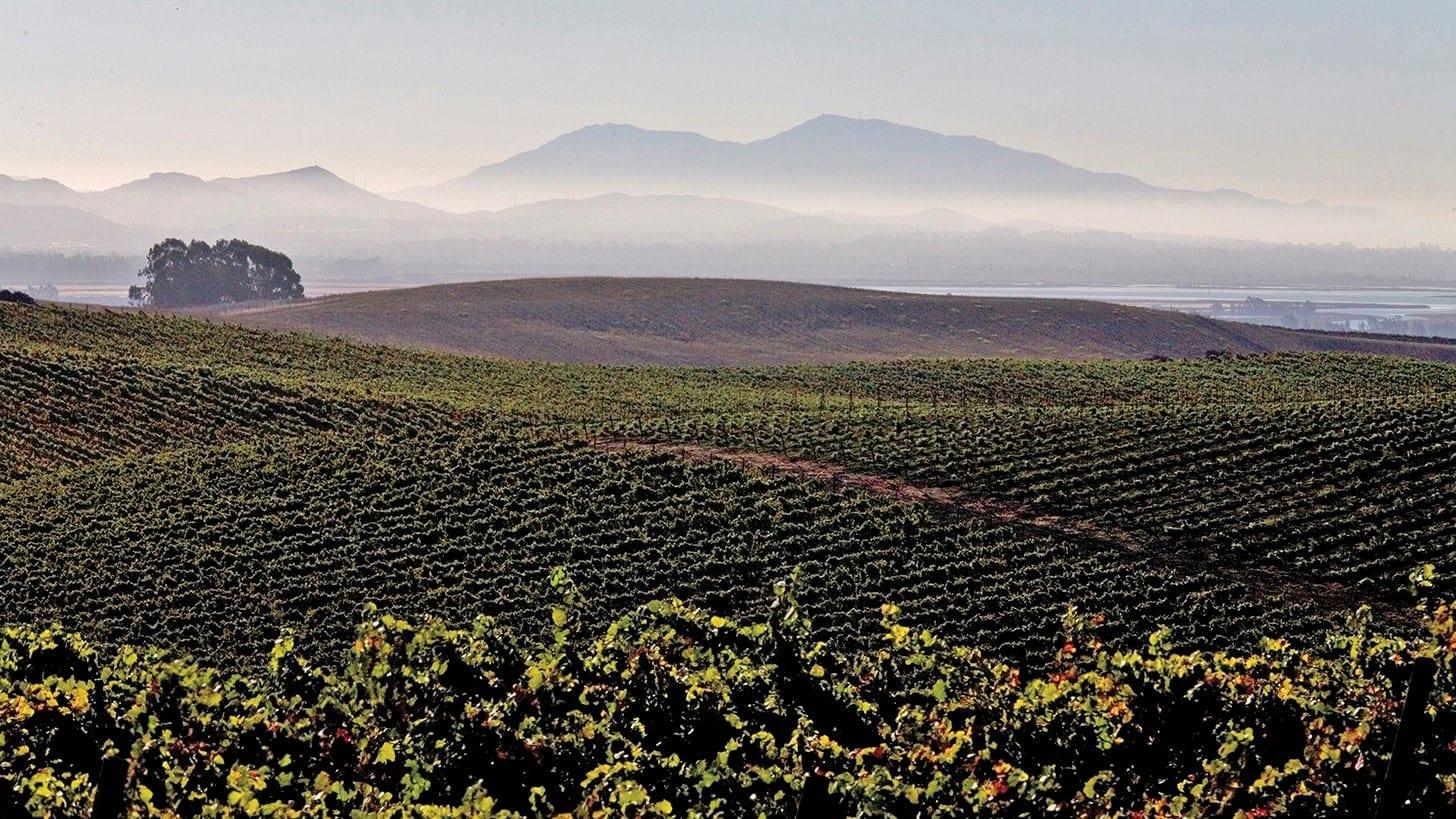 Sequoia Grove vineyard