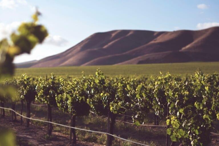 California vineyards by Tim Mossholder, Unsplash