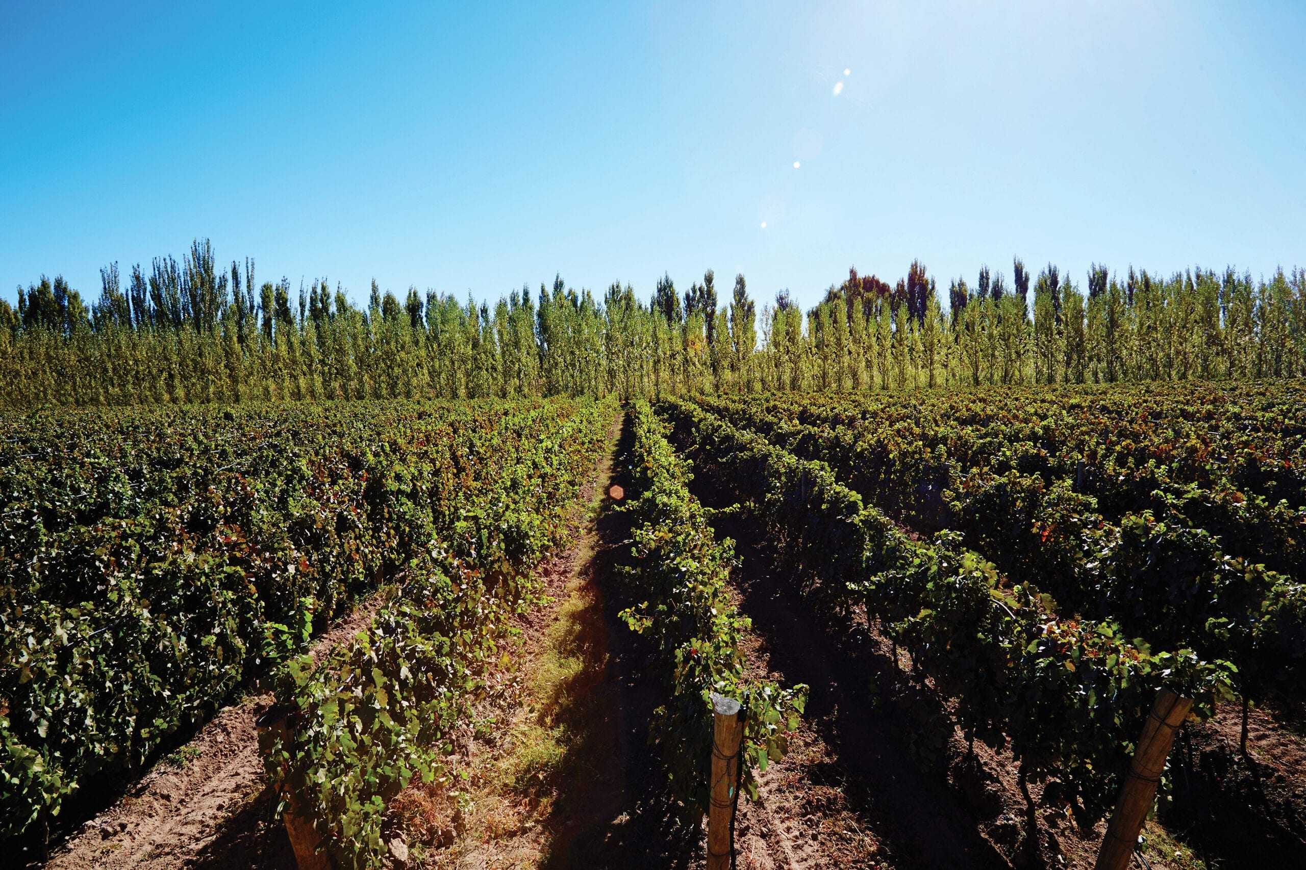 Chacra vineyards in Argentina