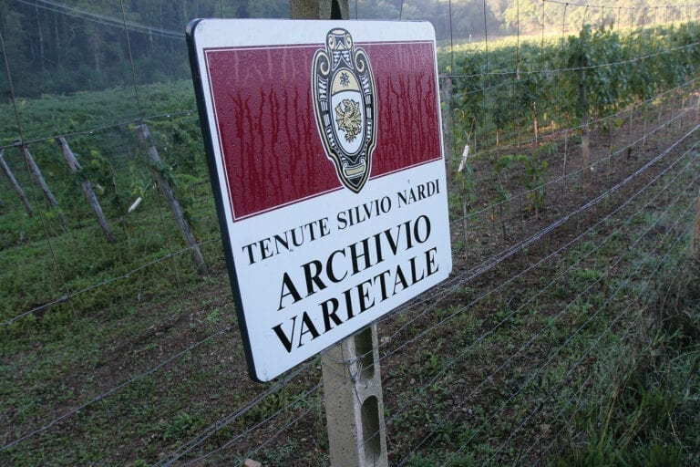 Tenute Silvio Nardi Brunello vineyards
