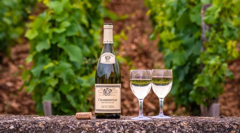 Bottle of Chardonnay in vineyard with two wine glasses