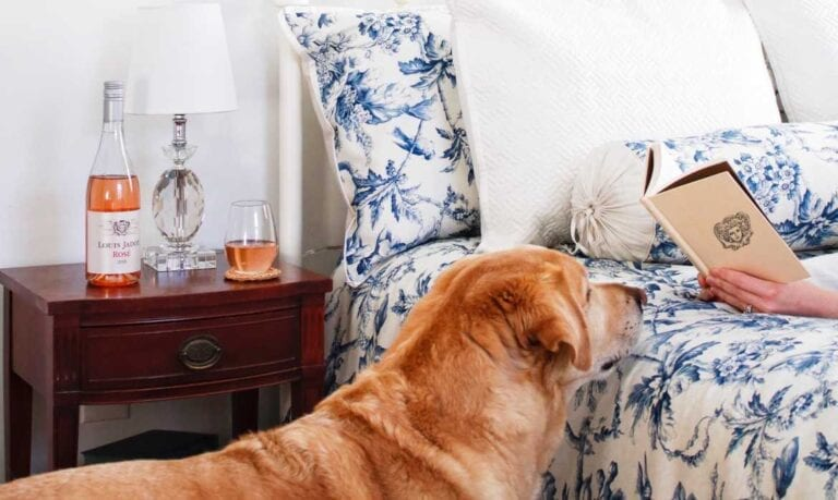 Reading on bed with dog sniffing the book and rose wine on nightstand
