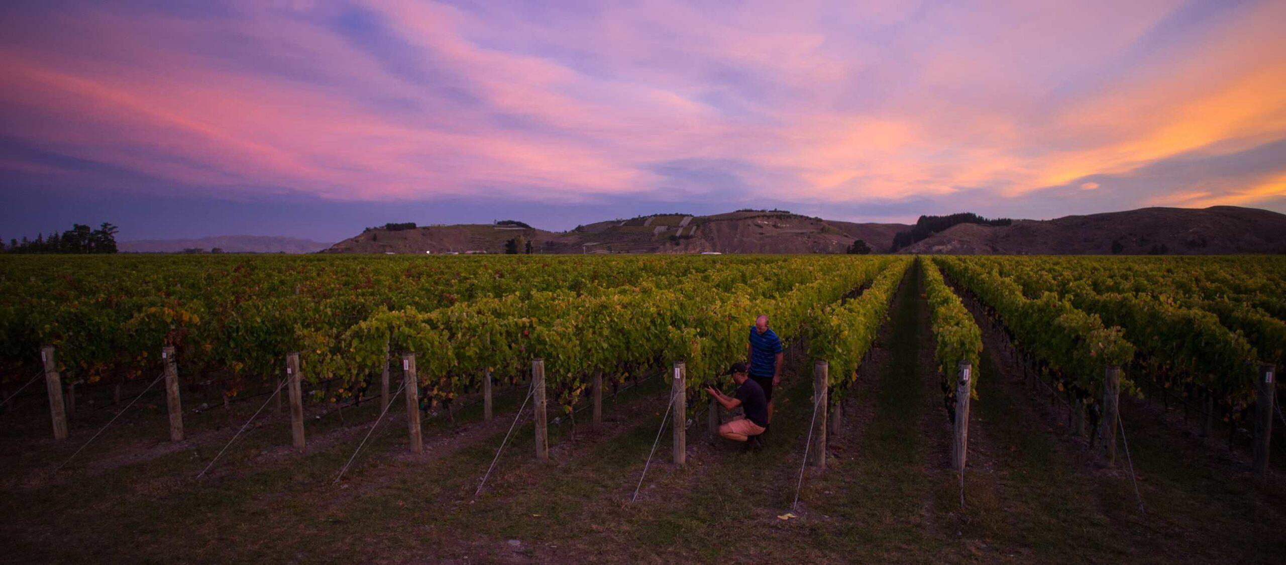 Craggy Range Winery Sunset New Zealand