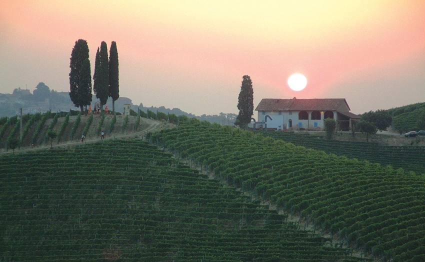 Michele Chiarlo winery and vineyards in Piedmont Italy