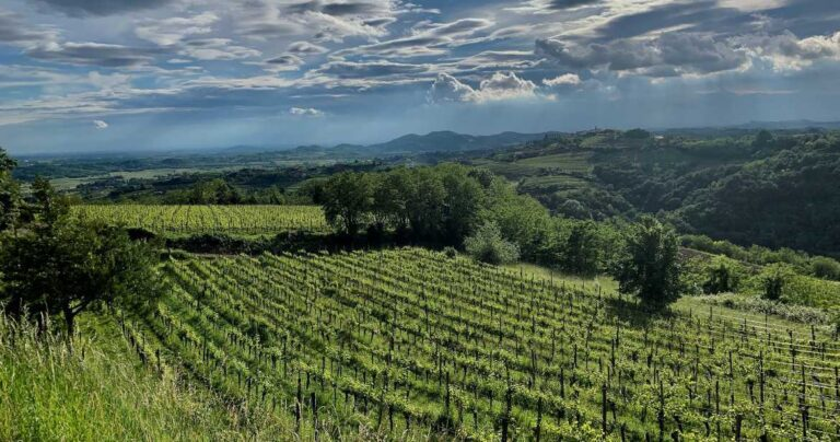 Collio vineyards
