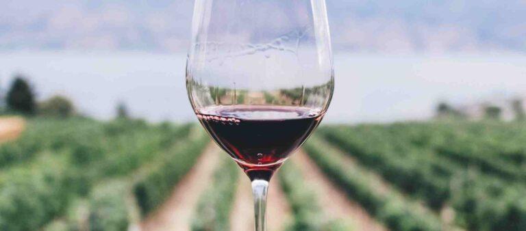 Pinot Noir Glass by Vineyards