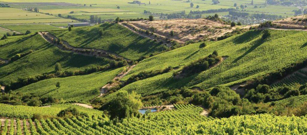 Apalta vineyard in Chile