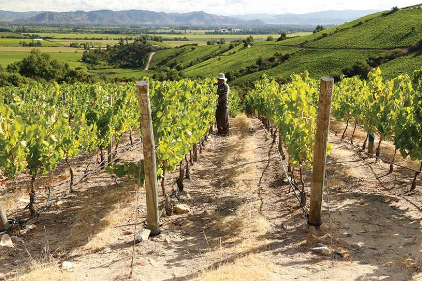 Montes Apalta Estate vineyard Colchagua Valley