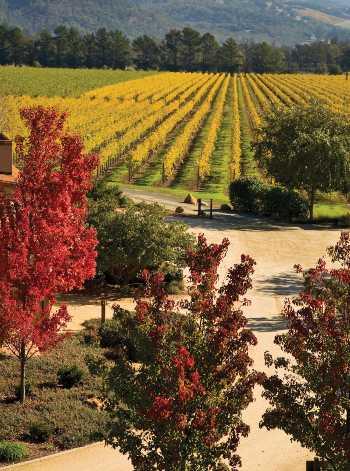 St. Francis vineyards