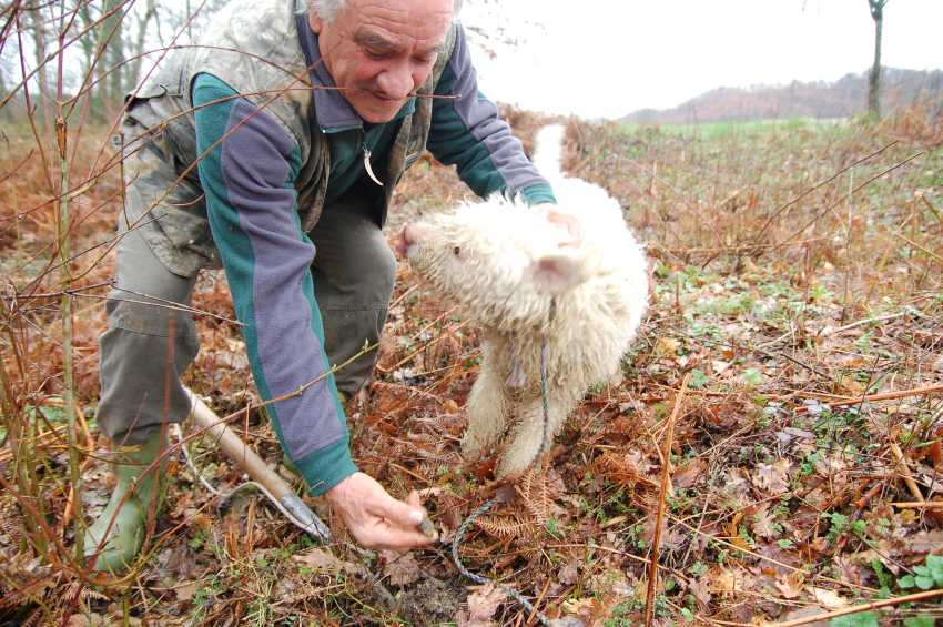 Man truffle hunting in Italy with his trained dog
